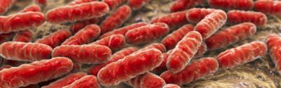 Klebsiella Pneumoniae New Dehli w polskich szpitalach