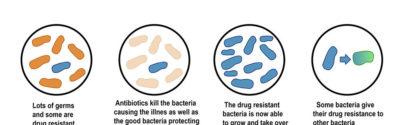 ECDC: więcej karbapenemoopornych bakterii